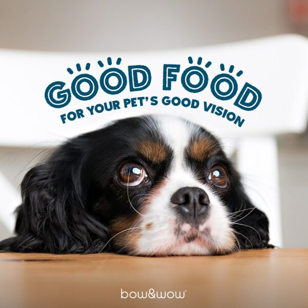 Bow Wow Pet Store Featured Image